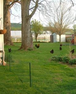 A Indústria de Telas Ramacrisna dispõe de telas, alambrados e cercas, para galinheiros, granjas e poedeiras, já fabricados de acordo com a nova lei da gripe aviária.