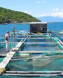 A Indústria de Telas Ramacrisna dispõe de telas, alambrados e cercas para aquicultura / aquacultura, piscicultura, maricultura, criação de peixes e frutos do mar.